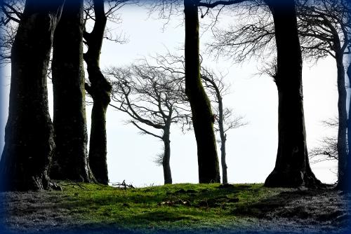 arbres Ecault_1198.jpg