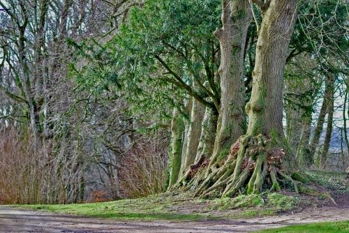 arbres a questrecques.jpg