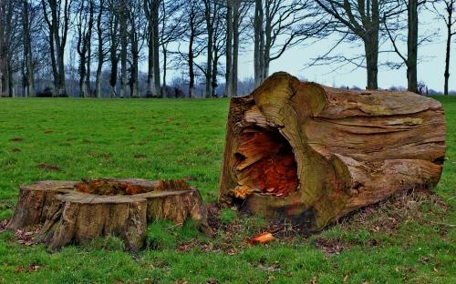 arbre La Rocque Recques sur Course.jpg