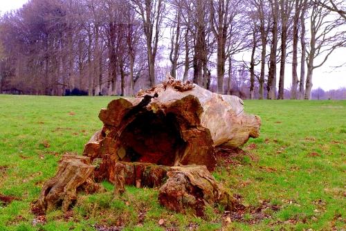 arbre au sol La Roque - Recques sur Course.jpg